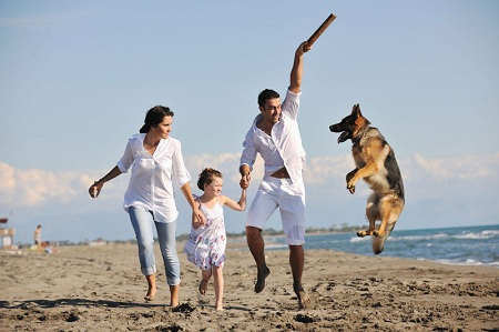 How to Choose the Best Dog for Your Family