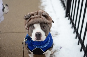 How to Help Pets Survive the Chilly Winters