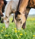Know About the Top 10 Horse Breeds