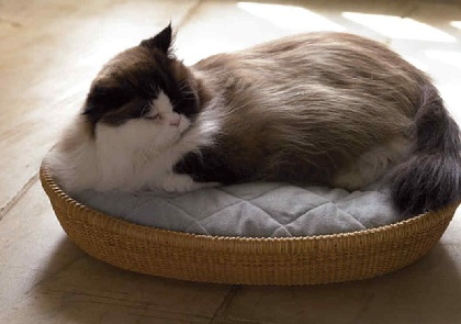 Know How to Choose the Right Cat Furniture