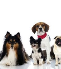 Know More About the Top 10 Dog Breeds