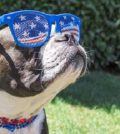 The Top 10 Most Popular Dogs in America
