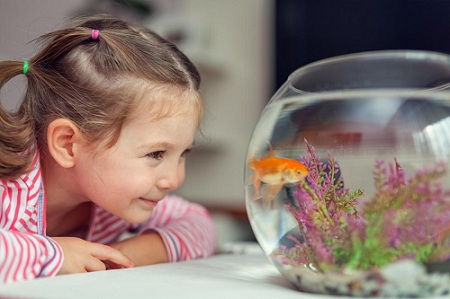 Top 10 Fish Breeds That Kids Like