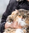 Top 5 remedies to tackle cat colds