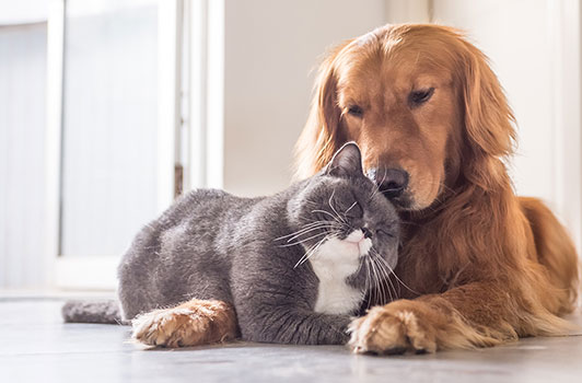 Best Insurance Plans for Dogs and Cats