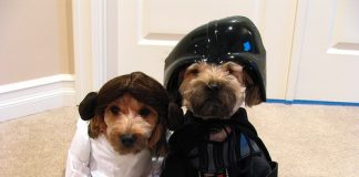 Some Exciting Dog Costumes