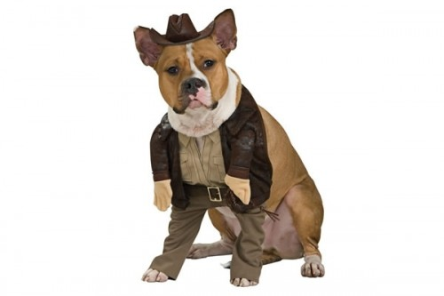 Indiana Jones Dog