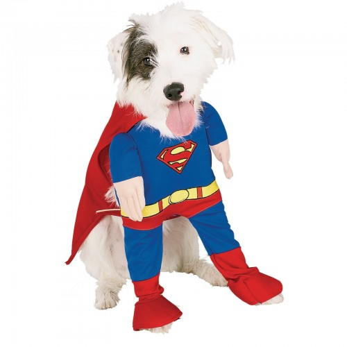 Superman Dog