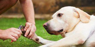 dog toenail trimming