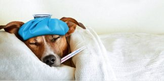 Top 10 Signs Your Dog May Be Sick