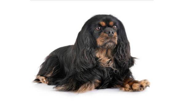 small dog breeds and hybrids
