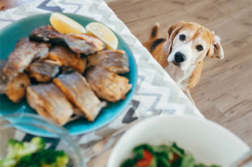 what human foods can dogs eat