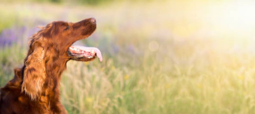 how to stop excessive drooling in dogs