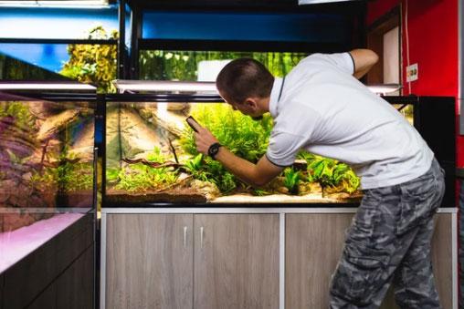 Cleaning Aquarium Plants