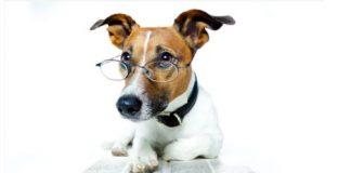 dog breeding books for dog breeders