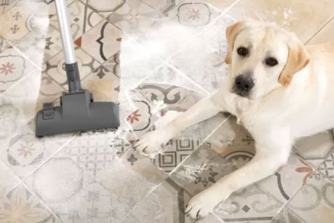 pet odor removal for carpet