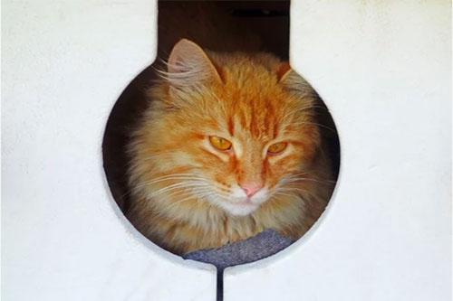 Outdoor Cat Shelter Ideas for Multiple Cats