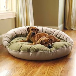 Different Types Of Dog Beds For Large Dogs That Offer Cozy Comfort A2z Pets Info