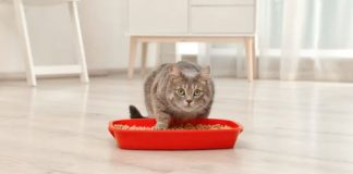 cat's litter box in the house