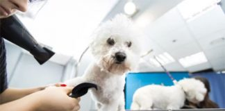 What kind of dryers do dog groomers use?