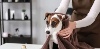 how to dry your dog's hair without a hairdryer