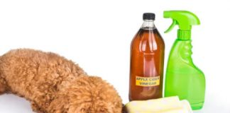 pet odor remover tips