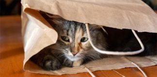 Outdoor Cat Shelter Ideas